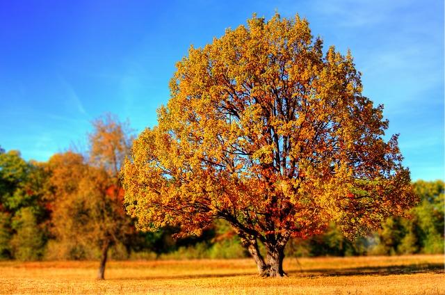 秋は乾燥対策が旬。